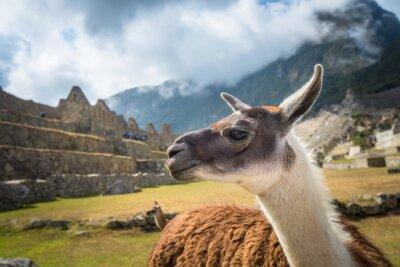 Fototapeta Machu Picchu, wpisanego na Listę Światowego Dziedzictwa UNESCO. Jednym z nowych siedmiu cudów świata