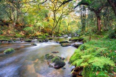 Fototapeta Magical Forest River