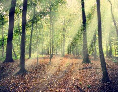 Fototapeta magiczny las w myst z promień słońca