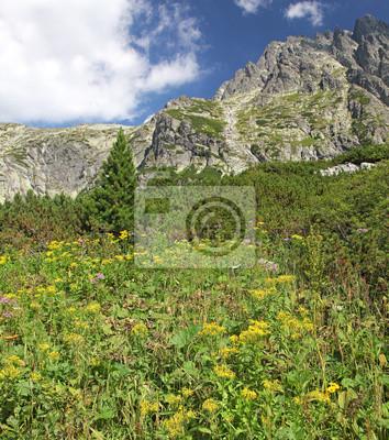 Mala Studena dolina - dolina w Tatrach Wysokich na Słowacji