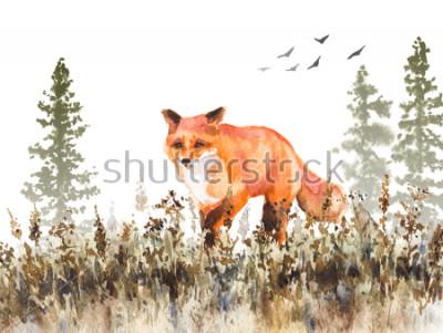 Fototapeta Malarstwo akwarelowe. Ręcznie opracowane animalistycznej ilustracji. Czerwonego lisa odprowadzenie na blaknięcie łące. Jesień scena z dzikim drapieżnikiem ruch, jodły w mgle i suszonej trawie.