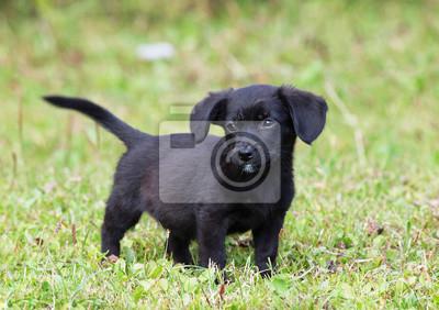 czarny pssy