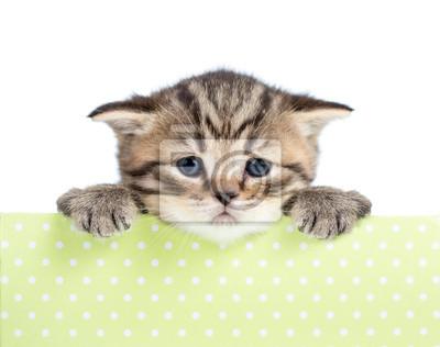 Zdjęcia małych kotów