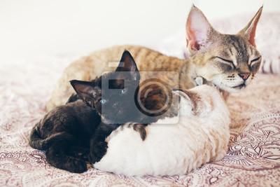 Mama Kot Z Jej Kociąt Miłości I Czułości Duży Szary Kot I Małe