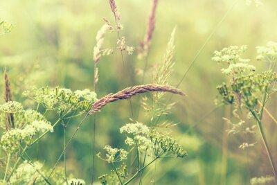 Fototapeta Meadow kwitnienia