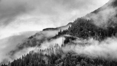 Fototapeta mgła na szczycie góry z sosny