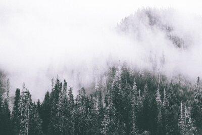 Fototapeta Mgła Smugi B & W