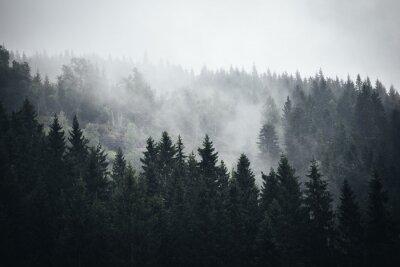 Fototapeta Mgła w norweskim lesie