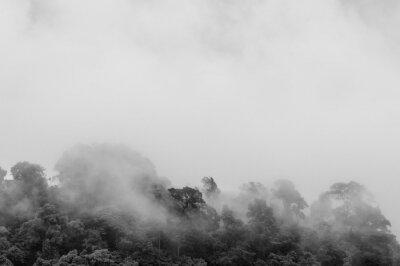 Fototapeta Mgła wschodzi z dżungli po ciężkim deszczu (czarno-biała)