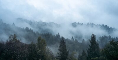Fototapeta Mgła wśród drzew i wzgórz