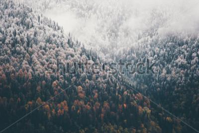 Fototapeta Mglisty jesień las iglasty krajobraz widok z lotu ptaka tło Podróż spokojny widok sceniczny