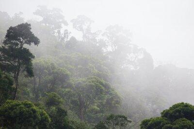 Fototapeta mglisty las dżungla