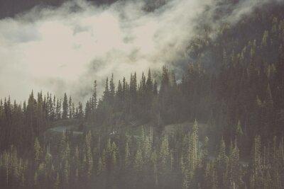 Fototapeta Mglisty Las Wilderness