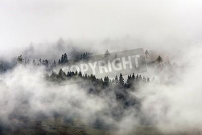 Fototapeta Mglisty poranek w lesie sosnowym i wysoką montain tle.