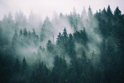 Fototapeta Misty krajobraz z lasu jodłowego w hipster zabytkowe stylu retro