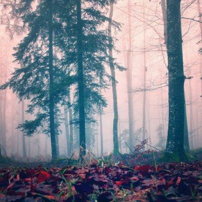 Fototapeta Misty lasy kolor czerwony