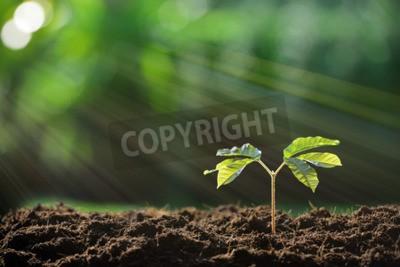 Fototapeta Młodych roślin w świetle poranka na tle przyrody