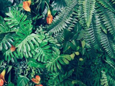 Fototapeta Modna zielona dżungla lato tła - w egzotycznych rocznika tonu