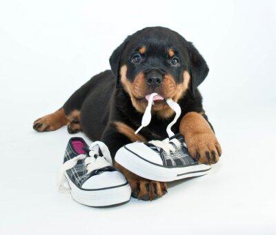 Fototapeta Moje buty!