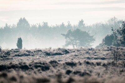 Fototapeta Moorland z drzewami w dolinie misty.
