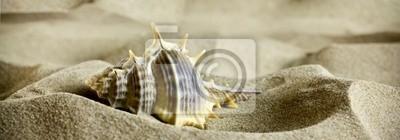 Morskie muszle na piasku.