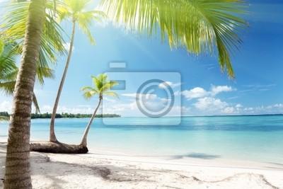 Morze Karaibskie i kokosowe palmy