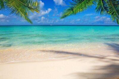 Fototapeta Morze Karaibskie i liści palmowych.