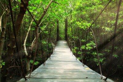 Fototapeta Most wiszący w lesie
