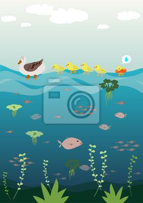 Fototapeta Mother duck teaching her baby to swim