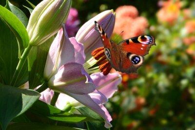 Fototapeta Motyl 188