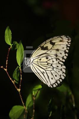 Motyl na gałązce