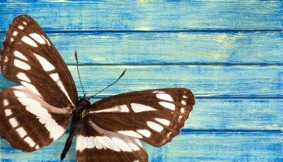 Fototapeta Motyl.