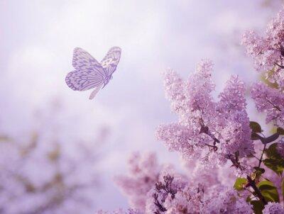 Fototapeta Motyl i kwiat