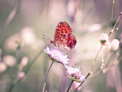 Fototapeta Motyl na Dziki kwiat
