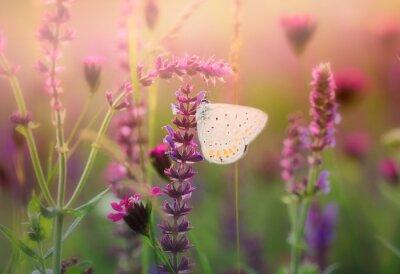 Fototapeta Motyl na dzikim kwiecie
