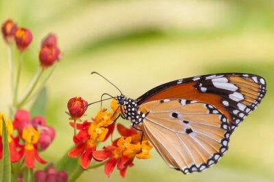 Fototapeta Motyl na kwiat