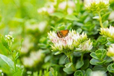 Fototapeta Motyl siedzi na roślinie