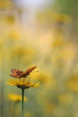 Fototapeta Motyl w ogrodzie