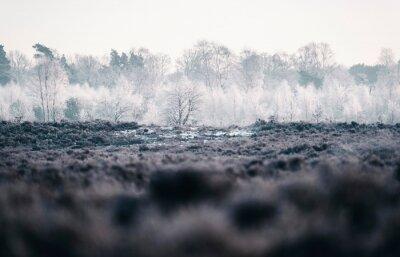 Fototapeta Mrożone drzewa w zimowym wrzosowisku.