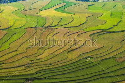 Fototapeta MuCangChai,Terraced rice field in rice season in Mu Cang Chai, Vietnam