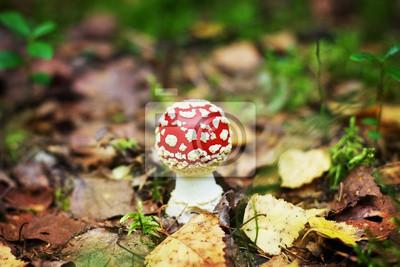 muchomor w lesie jesienią