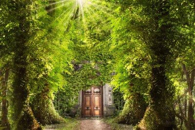 Fototapeta Mystic miejsce w lesie