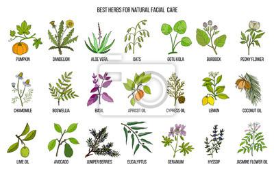 Nasiona zioła lecznicze Verve kolekcja - Zioła - Castorama