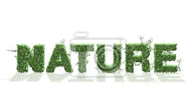 Fototapeta natura - logo z liści bluszczu - rozdzielone na białym BG