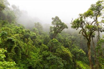 Fototapeta Naturalny las w Magoebaskloof