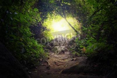 Fototapeta Naturalny tunel w tropikalnej dżungli leśnej drodze ścieżki Droga przez bujne, liści i drzew wiecznie zielonych lasów tropikalnych gęsta Tajemniczy magicznym tle