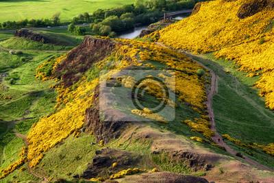 Naturein city Edinburgh, Scotland.