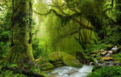 Fototapeta Nepal dżungla z ver