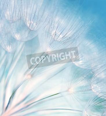 Fototapeta Niebieski abstrakcyjna kwiat dandelion tła, skrajne przeznaczone do walki radioelektronicznej z miękki, szczegóły pięknej przyrody