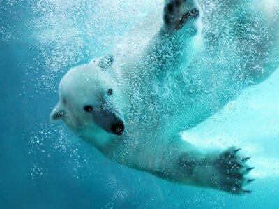 Fototapeta Niedźwiedź polarny atak podwodny